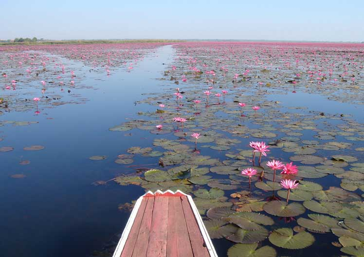 Red Lotus Sea Udon Thani